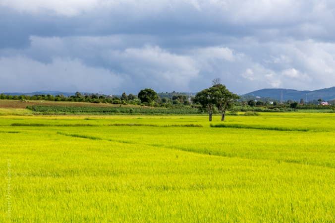 Vietnam_Da_Lat_Viaje_Asia_2014-2015_IMG_6487